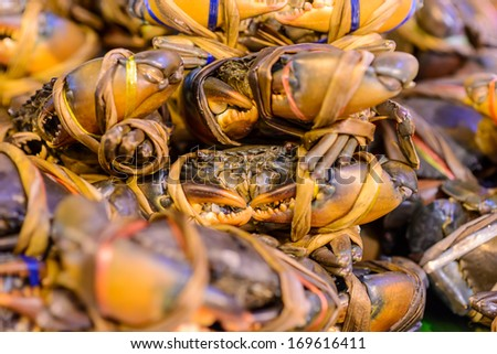 mud crab  tied and ready for sale ,Chiang mai , Thailand - stock photo