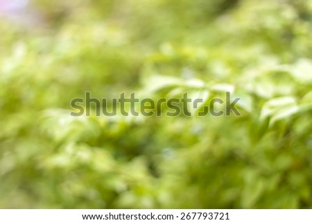 natural background of out of focus forest or bokeh - stock photo