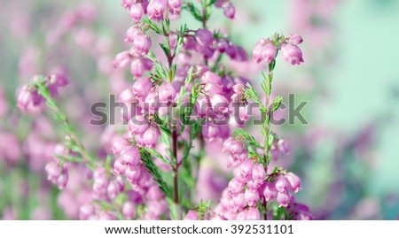 nature flower summer flora garden blooming bright - stock photo