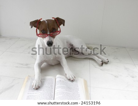 2nd picture of our jack russell reading - stock photo