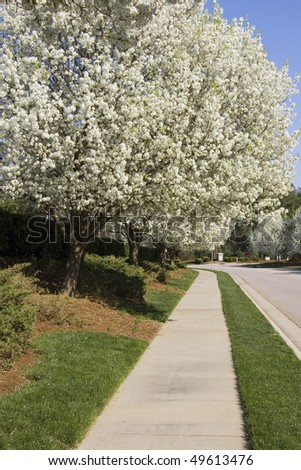 Neighborhood sidewalk in springtime - stock photo