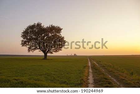 oak growing on an agricultural field. autumn season. sunset - stock photo