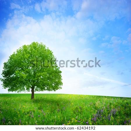 oak tree on the flower field - stock photo