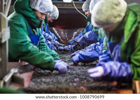 04 of October 2017 - Vinnitsa, Ukraine. People at work  in protective blue gloves make selection of frozen berries. Factory for freezing/ packing of fruits and vegetables.