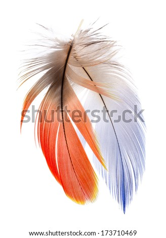 2 of Real MACAW bird Feathers. Natural colors: Blue, Red, Grey. Isolated on white background.