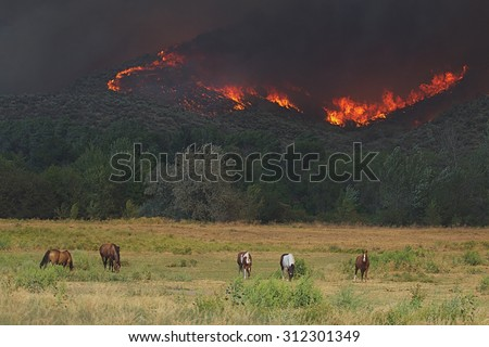 2015 Okanogan Complex Wild Fire:  Horses graze peacefully in a pasture in Riverside, WA, despite the rapid approach of flames and heavy smoke from the Tunk Block portion of the wildfire complex - stock photo