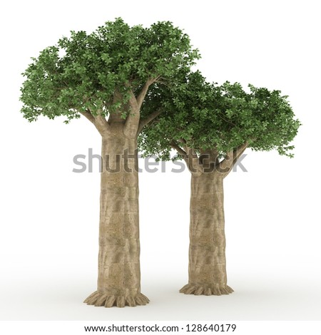 old baobab trees isolated on white - stock photo