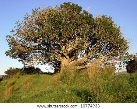 Old Tree - stock photo