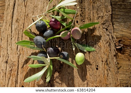 olive branch on wood background - stock photo