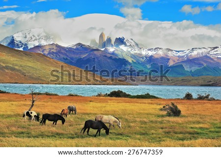 On the horizon, towering cliffs Torres del Paine.  Gray and black horse grazing in a meadow near the lake - stock photo