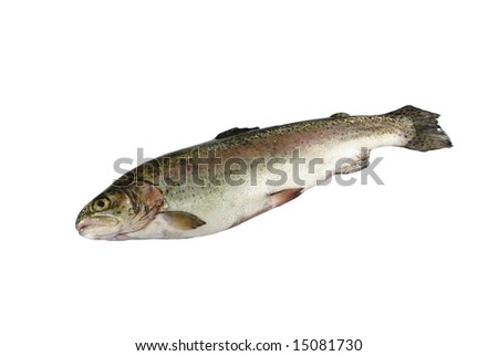 one rainbow hued trout on white background