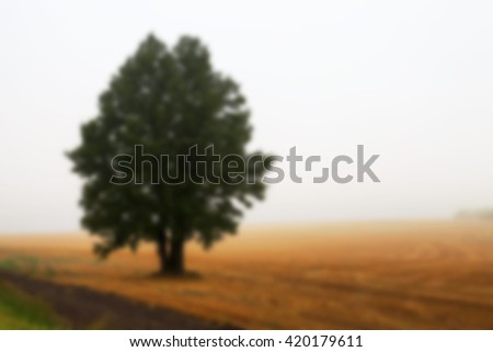 one tree growing in the field, photographed close up in the fog, autumn, Defocus - stock photo