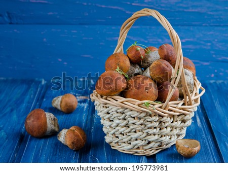 Orange-cap boletus  mushrooms (aspen mushrooms) on wooden background.  - stock photo