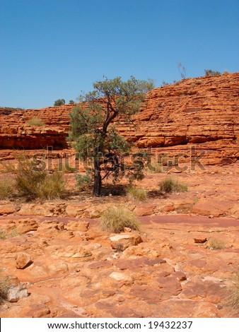 Orange Rock and tree - stock photo