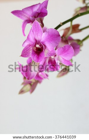 orchid (close up)
