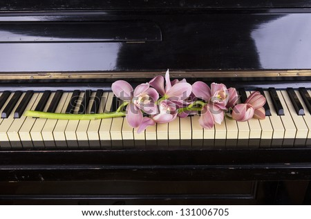 Orchid on a piano - stock photo
