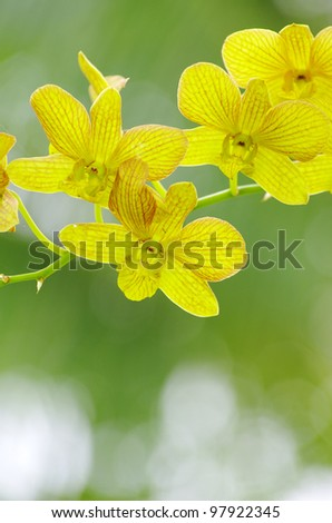 orchid on green background - stock photo