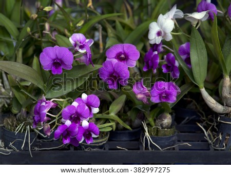 Orchids in the small pot - stock photo