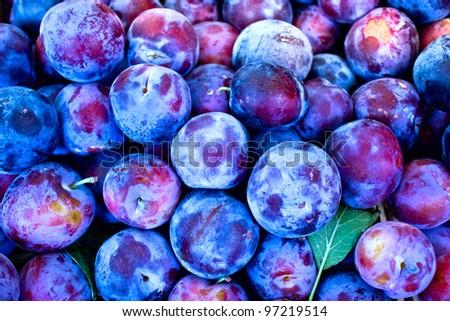 Organic plums - damson - stock photo