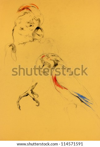 Original pastel and  hand drawn painting or  working  sketch of parrot.Free composition - stock photo