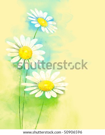 Painted watercolor camomile - stock photo