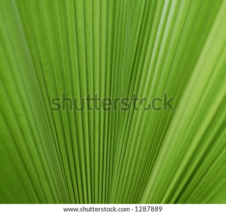 palm tree leave