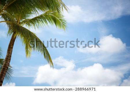 Palm tree over blue sky  - stock photo