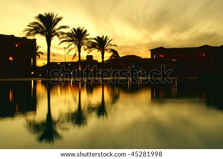 Palm trees in hotel territory - stock photo