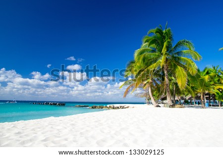 palm trees on tropical beach - stock photo