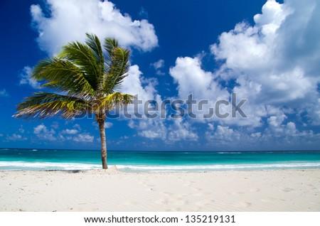 palm trees on tropical beach - stock photo