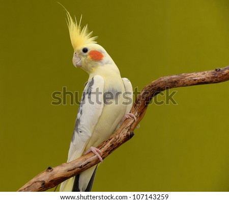 parrot resting on a dry branch - stock photo
