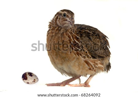 partridges on a white background