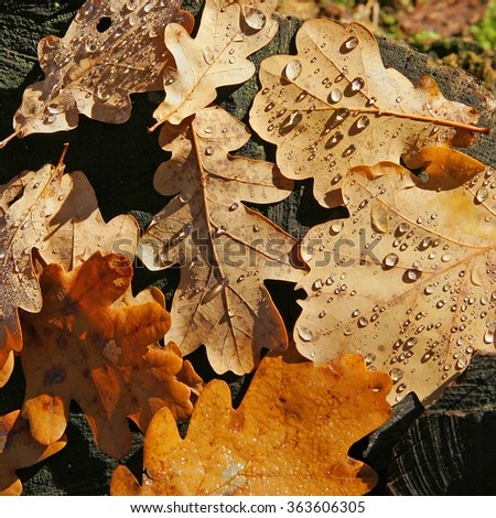 Pastel background with tree and oak autumn leaves with dew drops. Autumn sketch. - stock photo