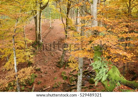 Path that crosses a stream in autumn beech forest