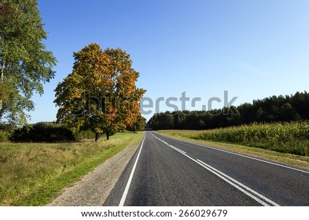 paved road running between corn field, forest and deciduous trees. Blue sky. - stock photo