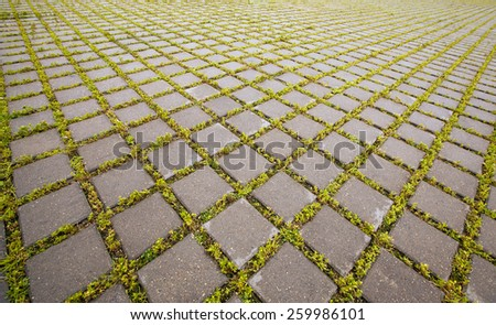 paving slabs between which grass grows. - stock photo