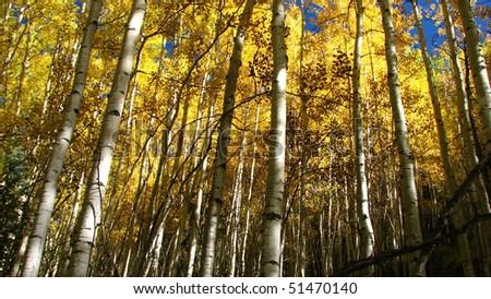 """peak aspens"" ""fall foliage"" gunnison colorado mountains ""rocky mountains"" crested butte"" yellow mountains crisp fall earthy - stock photo"