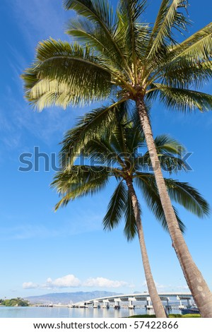 Pearl Harbor in Hawaii, bridge and palm tree - stock photo