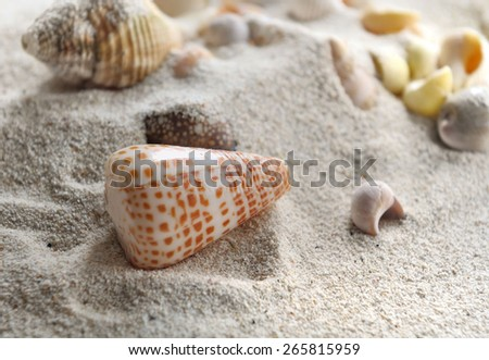 pearly seashell in the sand