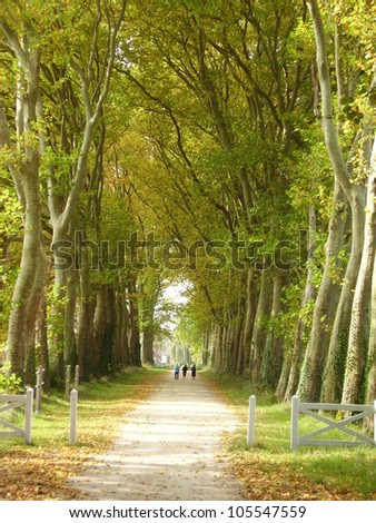 3 People walking down an avenue of London Plane Trees, leading from Chateau de Gizeux in the Loire France - stock photo