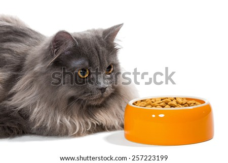 Persian cat sitting near the bowl of dry food, isolated on white - stock photo