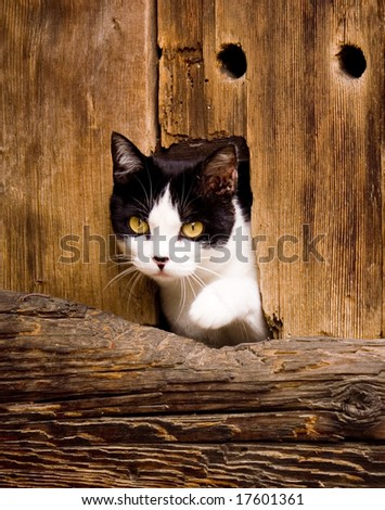 Photo: Cat peeking from Barn Door - stock photo