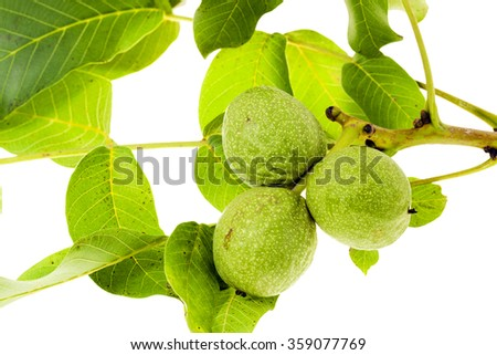 photographed close-up of walnuts isolated on white background - stock photo