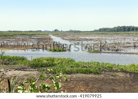 photographed the territory in which is located the marsh, the end of the summer season, open space - stock photo