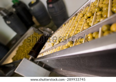 Photos of olives factory in mechanical sieve
