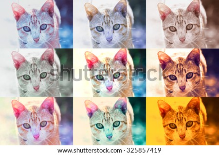 9 picture styles of Cute Cat