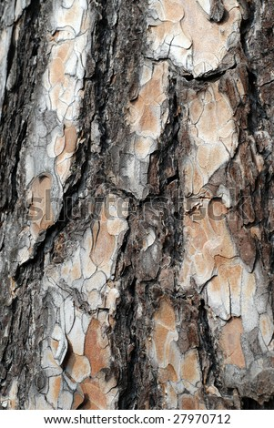 pine tree bark - stock photo