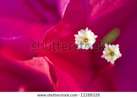 pink flower macro with two small white flowers - stock photo