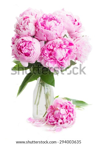 pink   peony flowers in vase   isolated on white background - stock photo