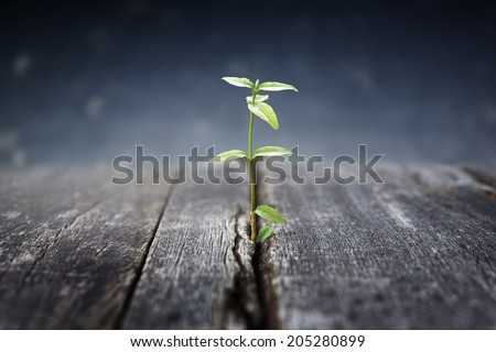 plant grows in old wood and symbolizes struggle and restart                                           - stock photo